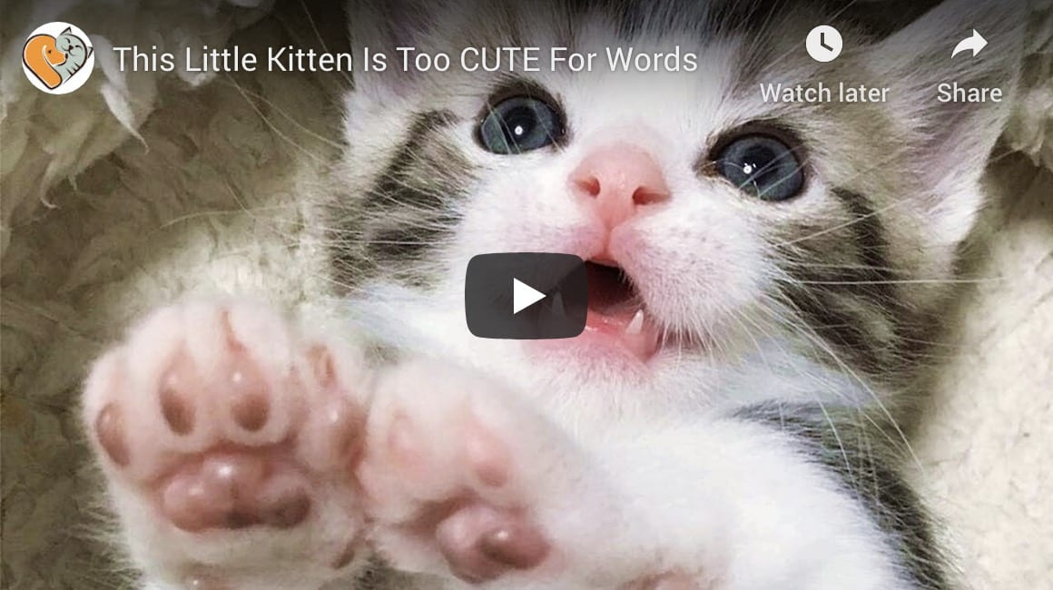cute kitten video